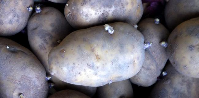 De patatten van ilse