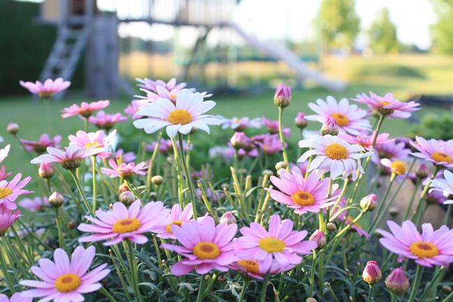 bloemen doen wonderen